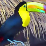 Toucan Bird Jigsaw